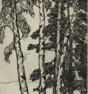 Birches and Pines, MacDowell Colony Woodland
