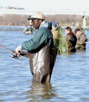 Fishermen wading in the Maumee river, April, 1999