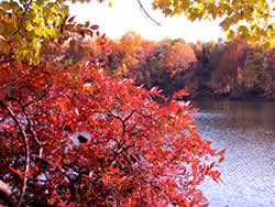 Photo: Autumn colors on Clopper Lake, Seneca Creek State Park, Maryland. NOAA Central Library